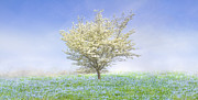Dogwood In The Mist Print by Debra and Dave Vanderlaan