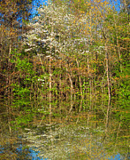 Dogwood Lake Prints - Dogwood Reflections Print by Barry Jones