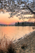 Alexandria Bay Posters - Dogwood Sunset Poster by JC Findley