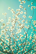 Dogwood Blossom Photo Metal Prints - Dogwood Tree Metal Print by Kim Fearheiley