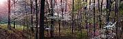 Dogwoods At Sunset Print by Lloyd Grotjan