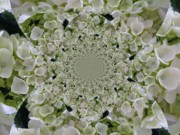 Doily Digital Art - Doily of Flowers by Barbara Griffin