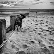 On The Beach Metal Prints - Doing what dogs always do Metal Print by John Farnan