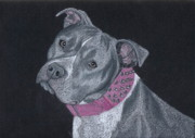Canine Drawings Framed Prints - Dolce Framed Print by Stacey Jasmin