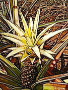 Tropical Plant Posters - Dole 2 Poster by Cheryl Young