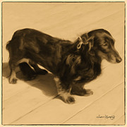 Dachshund Art Digital Art - Dolled Up Dachshund 2 by Susan  Lipschutz