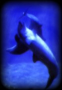 Dolphin Digital Art Framed Prints - Dolphin Dancers Framed Print by Amanda Eberly-Kudamik