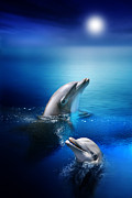 Moonlit Digital Art Prints - Dolphin Delight Print by Julie L Hoddinott
