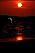 Beach Sunsets Photo Prints - Dolphin Joy Print by Emily Stauring