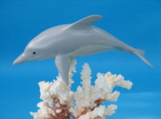 Woodcarving Sculpture Prints - Dolphin on Coral Print by Jack Murphy