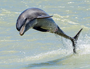 Splash Prints - Dolphin Print by Wade Aiken