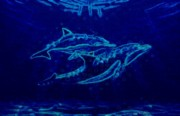 Dolphins Digital Art - Dolphins by Sally Echternach