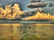 Dolphins Play At Sanibel Island Print by Jeff Breiman