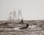 With Pyrography Prints - Dolphins With Ship Print by Will Edwards