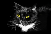 Domestic Cats Digital Art - Domestic Black and White Cat by Julie L Hoddinott