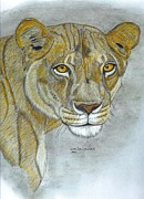 Lion Drawings Originals - Dominant Lioness by Don  Gallacher