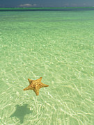 Floating In Water Prints - Dominican Republic, Cana Bavaro Beach, Starfish Floating On Water Print by Cosmo Condina