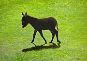 Donkey Foal Framed Prints - Donkey Foal Framed Print by Eamon Doyle