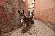 Y120831 Art - Donkey In Medina by Dave Stamboulis Travel Photography