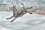 Donkey Drawings Framed Prints - Donkey Playing in Snow color version Framed Print by Dawn Senior-Trask