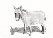Donkey Drawings Prints - Donkey  Print by Sherri Strikwerda