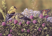 Craig Carlson Prints - Dont Bug Us - Goldfinches Monarch Butterfly Print by Craig Carlson