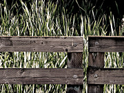 Split Rail Fence Photos - Dont Fence Me In by Sandy Rubini