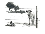 Cows Drawings Posters - Dont Fence Me In Poster by Wayne Feamster