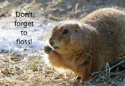 Prairie Dog Framed Prints - Dont Forget to Floss Framed Print by Karol  Livote