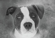 Nik Posters - Dont Hate the Breed - Black and White Poster by Larry Marshall