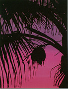Silhouette Tapestries - Textiles Posters - Dont Sit Under the Palm Tree Poster by Kim Jacobi
