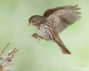 Sparrows Photos - Dont Squeeze The Charmin by Gerry Sibell