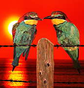 Birds - Dont Stop Me Now by Eric Kempson