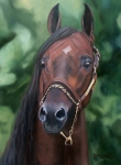 Horse Art - Dont Worry Saddlebred Sire by Donna Thomas