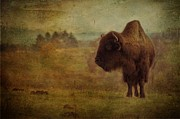 Bison Photos - Doo Doo Valley by Trish Tritz