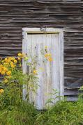 Brown Building Posters - Door To An Old Shed With Wildflowers Poster by David Chapman