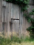 Barn Door Posters - Door Vines Poster by Michael L Kimble