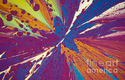 Polarized Prints - Dopamine Print by Michael W. Davidson