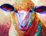 Llama Metal Prints - Dorset Ewe Metal Print by Marion Rose