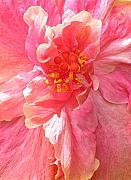 Pink Hibiscus Posters - Double Pink Hibiscus Poster by James Temple