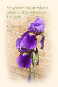 Scripture Framed Prints - Double Purple Iris with Bricks Colossians 3v2 Framed Print by Linda Phelps