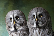 Owl Metal Prints - Double Take Metal Print by Dawn OConnor