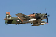 Airplane Prints - Douglas AD-4 Skyraider Print by Adam Romanowicz