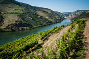 Winemaking Framed Prints - Douro River Valley One Framed Print by Josh Whalen