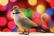 Dove Metal Prints - Dove Against Bokeh Light Metal Print by Mis Imagenes