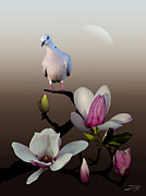 Dove Digital Art Acrylic Prints - Dove and Magnolia Acrylic Print by IM Spadecaller