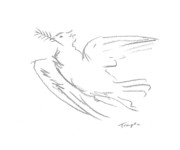 Temple Drawings - Dove by James Temple