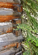 Log House Prints - Dovetail Log Construction Print by Karon Melillo DeVega