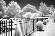 Infrared Nature Art Prints Photos - Dow Gardens Infrared Michigan Landscape Fine Art by Kathy Fornal