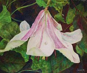 Color Pencil Drawings - Down Facing Lily  by Barbara Smeaton